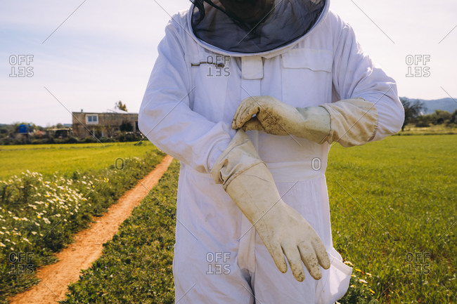 Crop unrecognizable beekeeper in white costume putting on protective gloves while standing on green grassy meadow and preparing for working on apiary