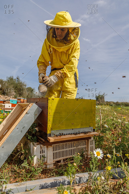 Unrecognizable woman beekeepers in protective costume and mask using smoker while inspecting honeycomb in apiary
