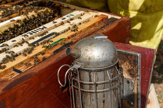 Closeup of weathered rusty metal bee smoker near honeycomb frame full of bees during honey harvesting in apiary