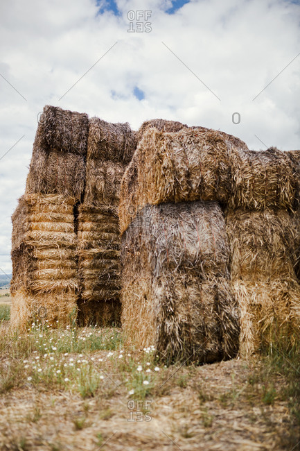 Rural landscape with dry hay rolls stacked in field against cloudy sky in summer day in countryside