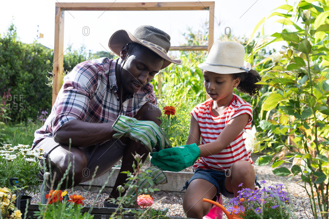 African American girl and her father social distancing at home during quarantine lockdown, spending time in their garden together, planting flowers, on a sunny day.