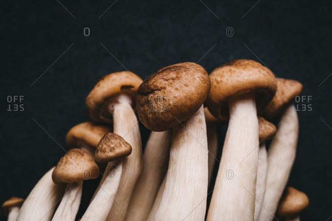 Detail of fresh mushrooms on black background