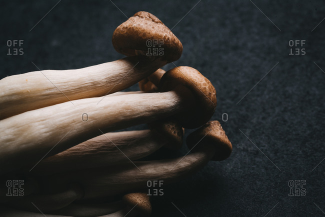 Close up of a bunch of fresh mushrooms on black background