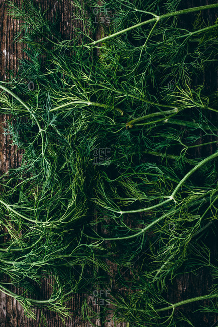 Fresh dill on wooden background
