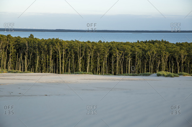 Lush forest between water and sand, Leba, Poland