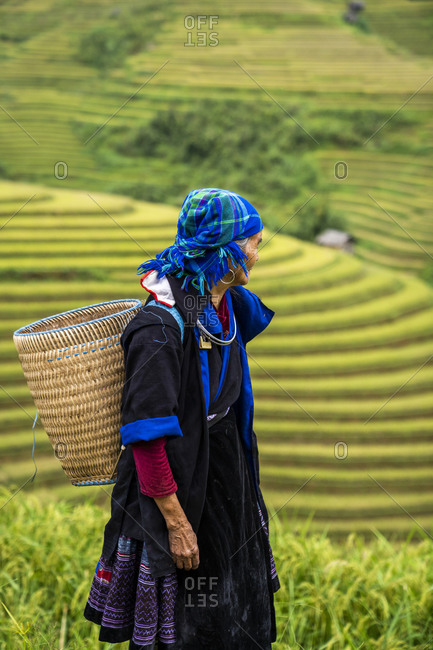 Large rice harvest in the middle of Vietnam