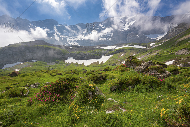 Flower-covered high alpine meadow with mountain massif in the background