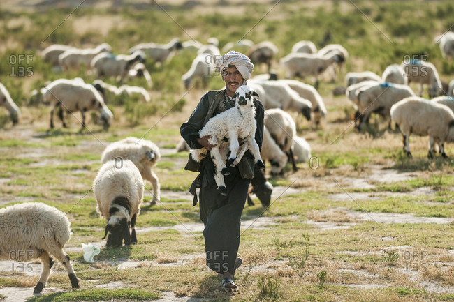 Herat, Afghanistan - June 17, 2011: A Pashtun nomad carries one of the smaller lambs back to its flock