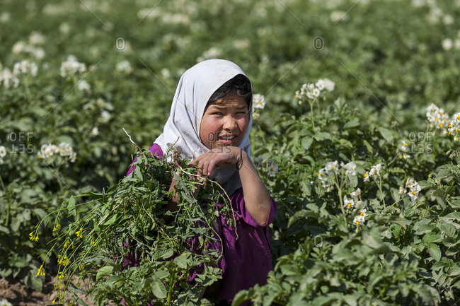 Bamyan, Afghanistan - June 21, 2011: A girl clears weeds from a potato field