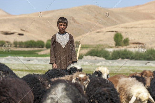 Bamyan, Afghanistan - June 21, 2011: A boy takes his goats to graze in Bamiyan province in Afghanistan