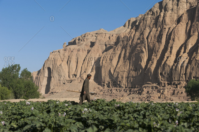 Bamyan, Afghanistan - June 25, 2011: A famer works in potato fields with the ancient Buddha niches visible in the distance in Bamiyan province in Afghanistan