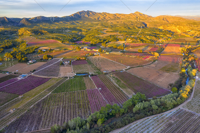 Spain- Region of Murcia- Cieza- Aerial view of vast countryside orchards at dusk