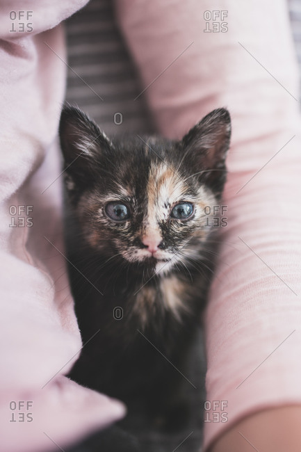Portugal- Portrait of cute kitten sitting with female owner