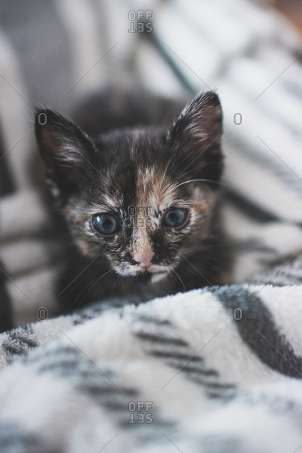 Portugal- Portrait of cute kitten lying on blanket