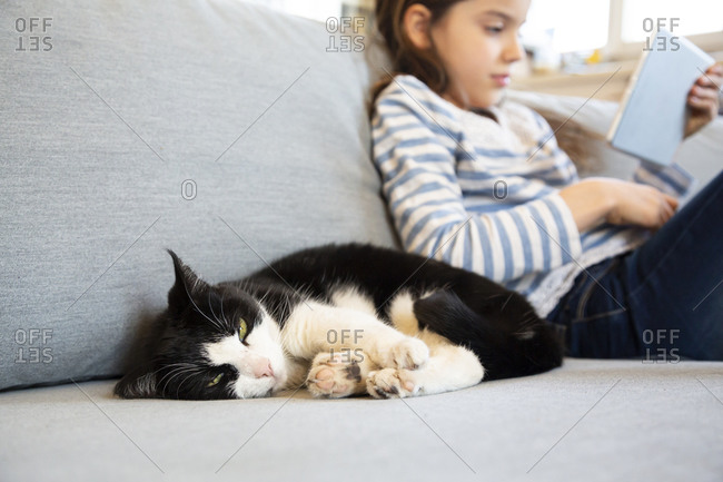 Portrait of cat snoozing on couch with girl using digital tablet in the background
