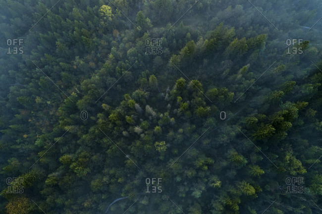 Germany- Bavaria- Drone view of green foggy forest in Pupplinger Au