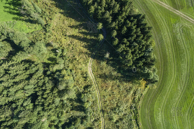 Germany- Bavaria- Drone view of green grove and meadow in summer