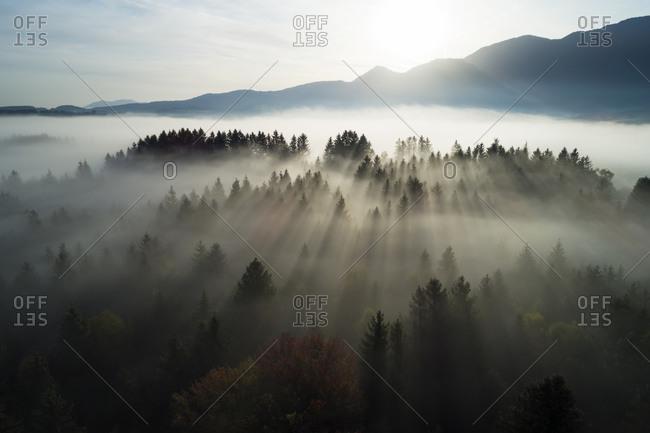 Germany- Bavaria- Garmisch-Partenkirchen- Drone view of Murnauer Moos wetland at foggy sunrise