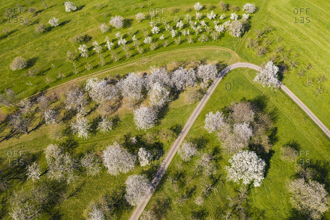 Germany- Baden-Wurttemberg- Neidlingen- Drone view of dirt road stretching across countryside orchard in spring