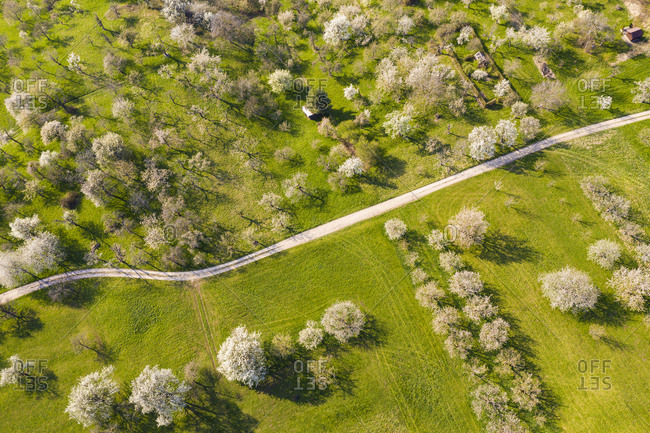 Germany- Baden-Wurttemberg- Owen- Drone view of dirt road stretching across countryside orchard in spring