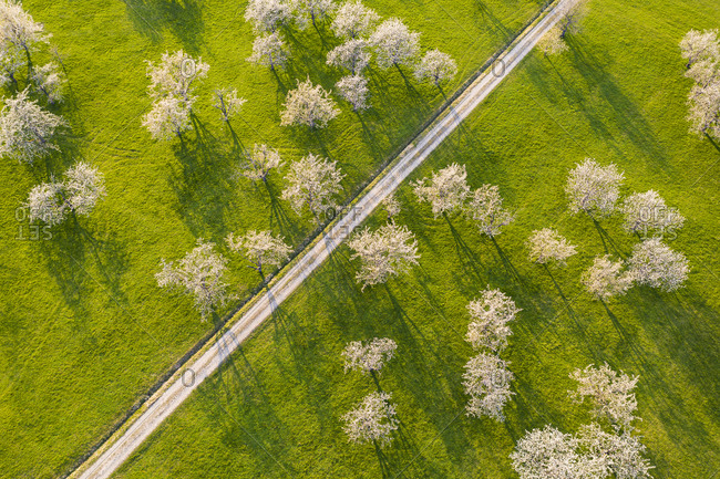 Germany- Baden-Wurttemberg- Beuren- Drone view of dirt road stretching across countryside orchard in spring