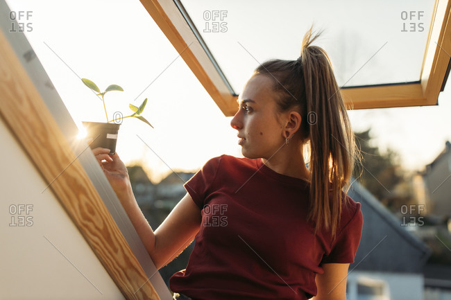 Young woman holding potted plant at the window in backlight