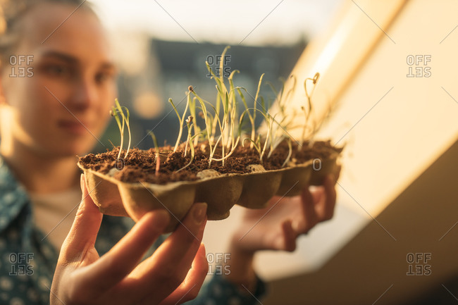 Young woman holding spinach plant at the window in backlight