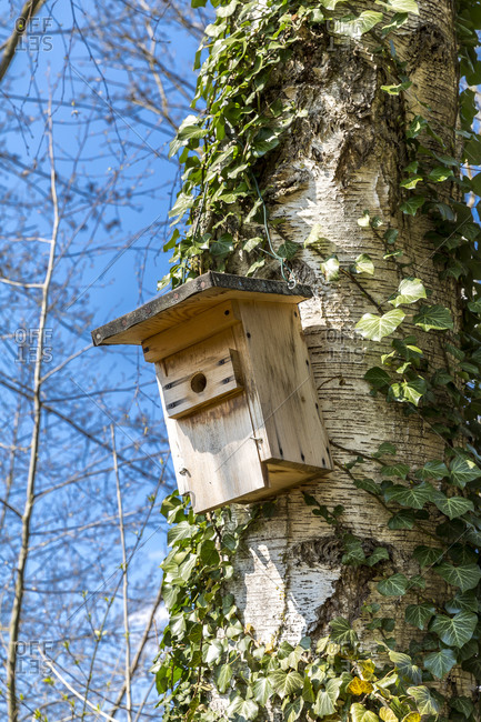 Germany- Low angle view of birdhouse hanging on tree trunk in spring