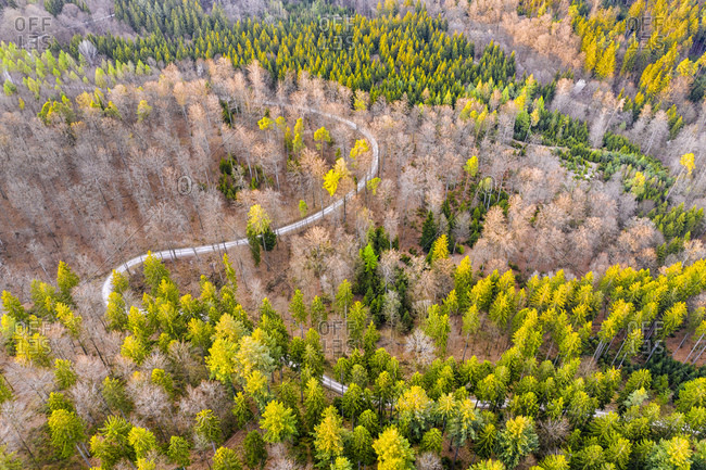 Drone shot of trees growing in Swabian Forest- Baden Wuerttemberg- Germany