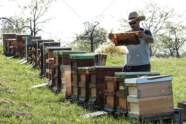 Beekeeper analyzing honeycomb with honey bees over boxes on field