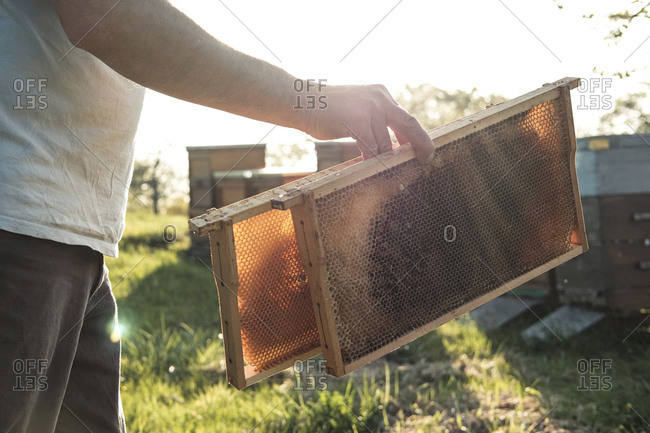 Close-up of beekeeper holding honeycomb trays while walking towards beehives