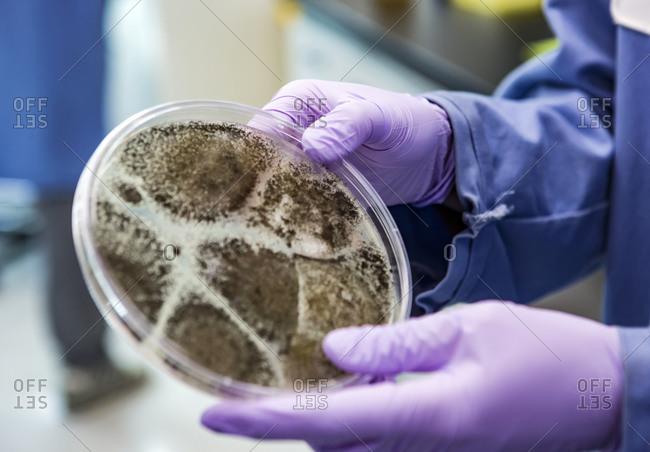 Bioscience research in a laboratory