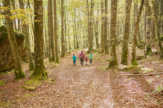 Family walking in a beech forest