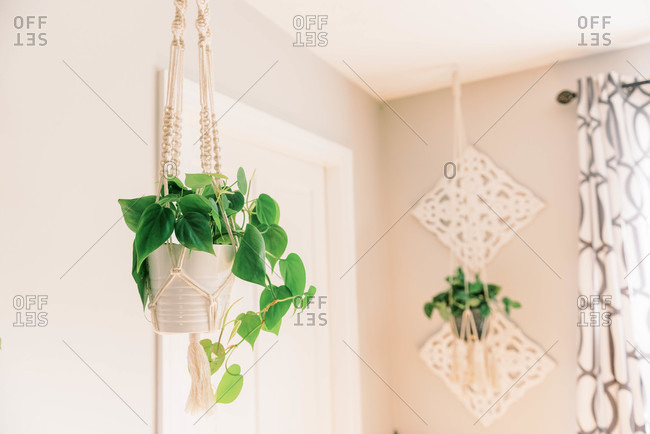 Hanging philodendron in a macrame plant hanger.