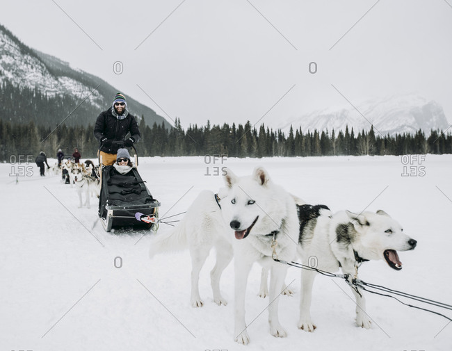 Couple sits in dogsled led by dogs on frozen lake in winter