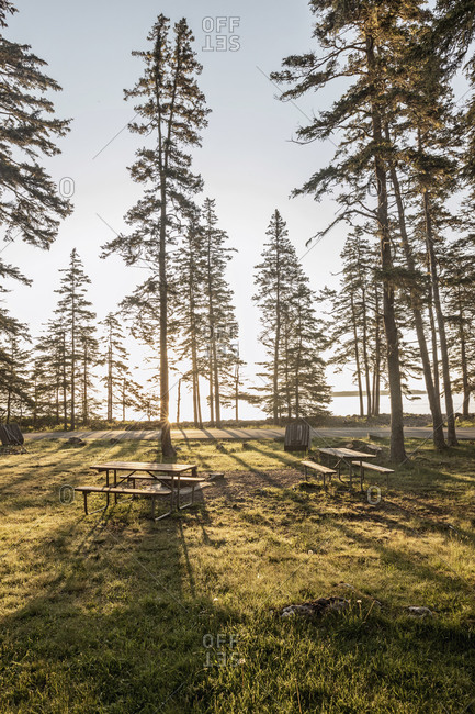 Morning sun filters through trees at picnic area, Acadia National Park