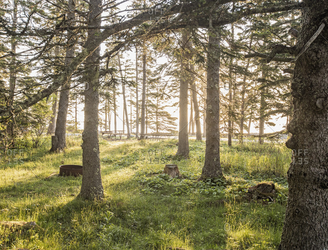 Golden sunlight filters through trees onto picnic area in Maine