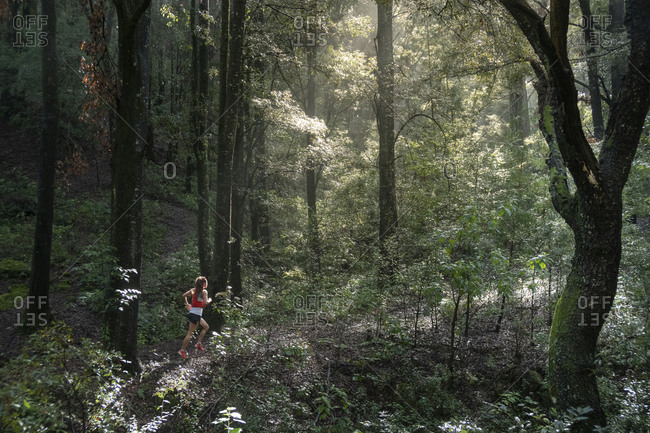 One woman running on a trail in a dense forest with high trees