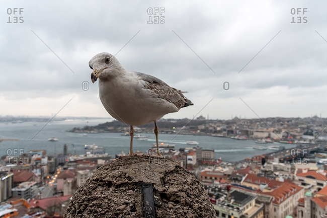 February 20, 2018: Seagull and the Istanbul skyline at dusk as seen from the Galata Tower. Istanbul, Turkey