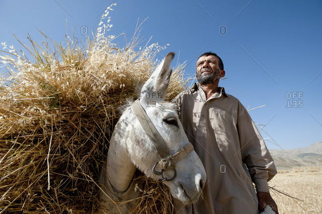 A farmer and his donkey carrying grass in Panjshir valley