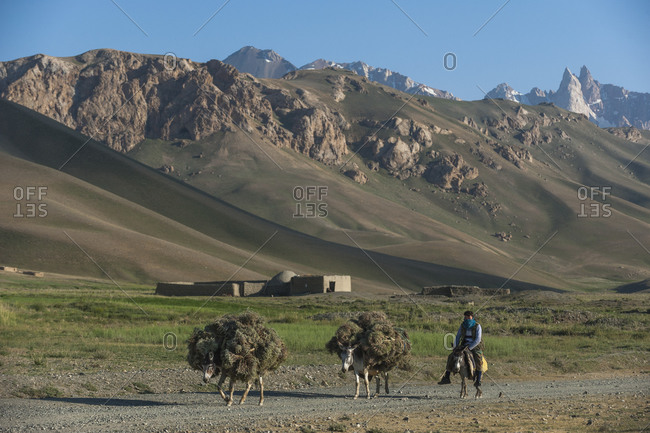 Qala-e Sabzi, Bamiyan province, Afghanistan - June 22, 2011: A man carries fodder on donkeys with views of the Koh-i-Baba mountains