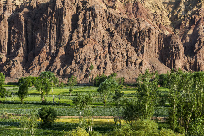 Green fields of wheat and potato irrigated with water in a dry landscape in Bamiyan Province