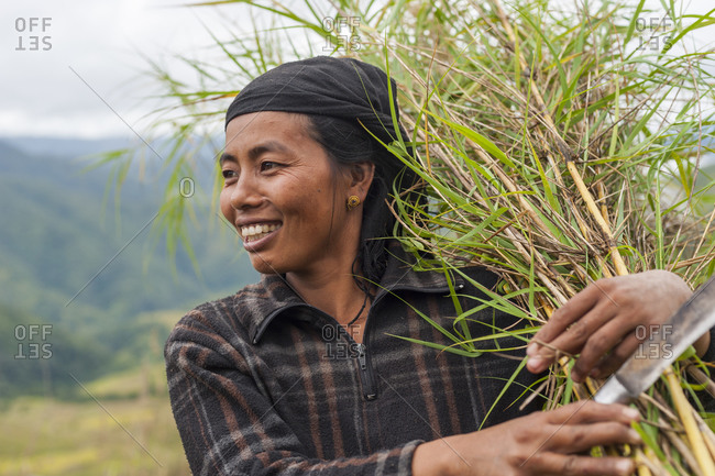 Manipur, India - October 15, 2010: A woman harvests thin bamboo which she will use to make trellising in India