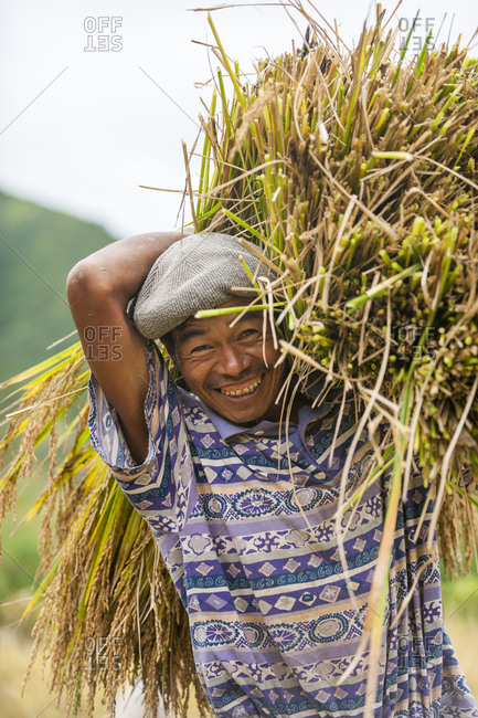 A man clutches a bundle of freshly harvested rice in India