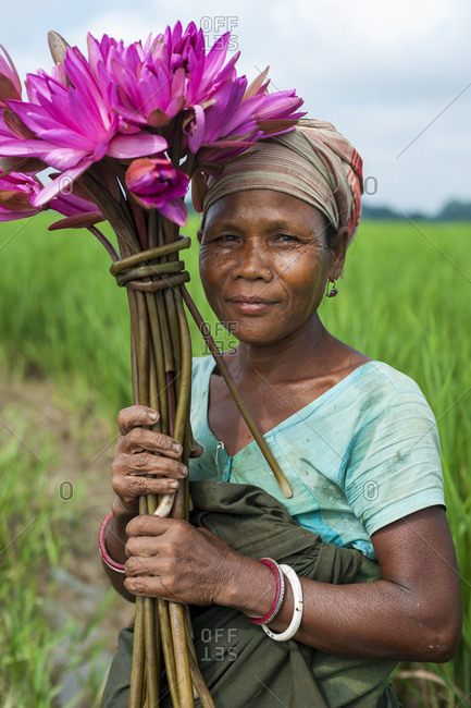A woman harvests lotus flowers from a lily pond in Northeast India