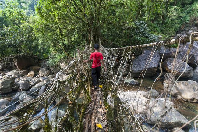 Ritymmen bridge is the longest living root bridge in Meghalaya in India