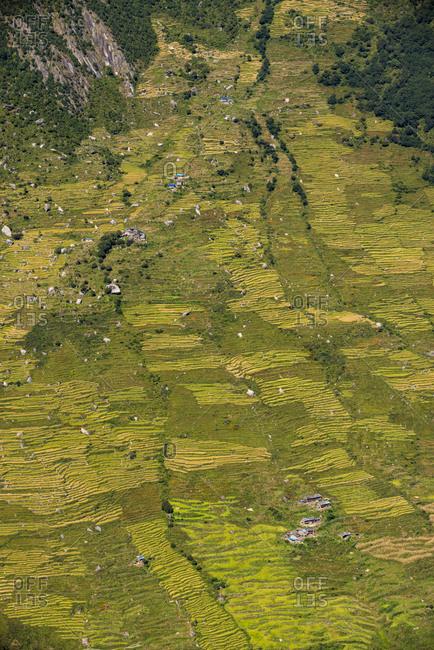 Terraced hillsides near Briddim in the Langtang region of Nepal