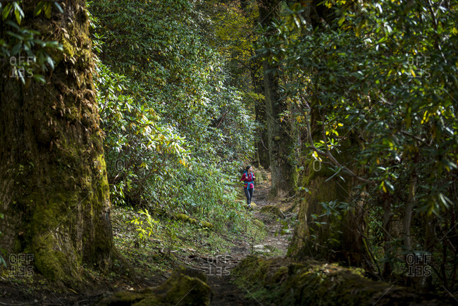 A woman hikes through a forest in the Gosainkund region in the Himalayas
