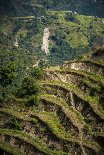 Terraced fields the Helambu district of Nepal