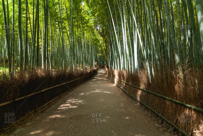 Bamboo forest path in Arashiyama
